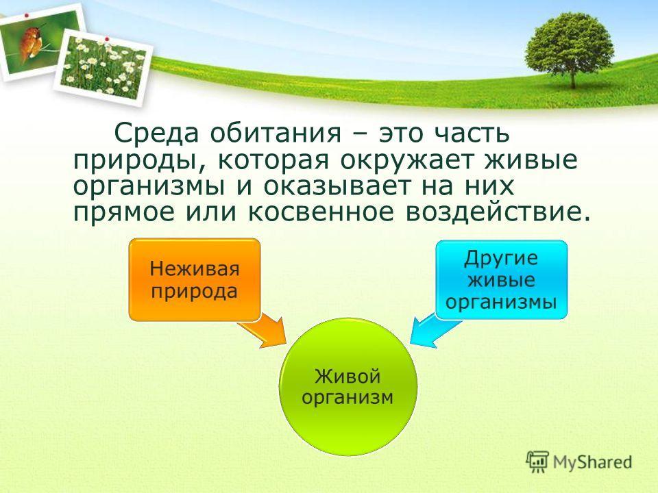 Среда обитания – это часть природы, которая окружает живые организмы и оказывает на них прямое или косвенное воздействие. Живой организм Неживая природа Другие живые организмы
