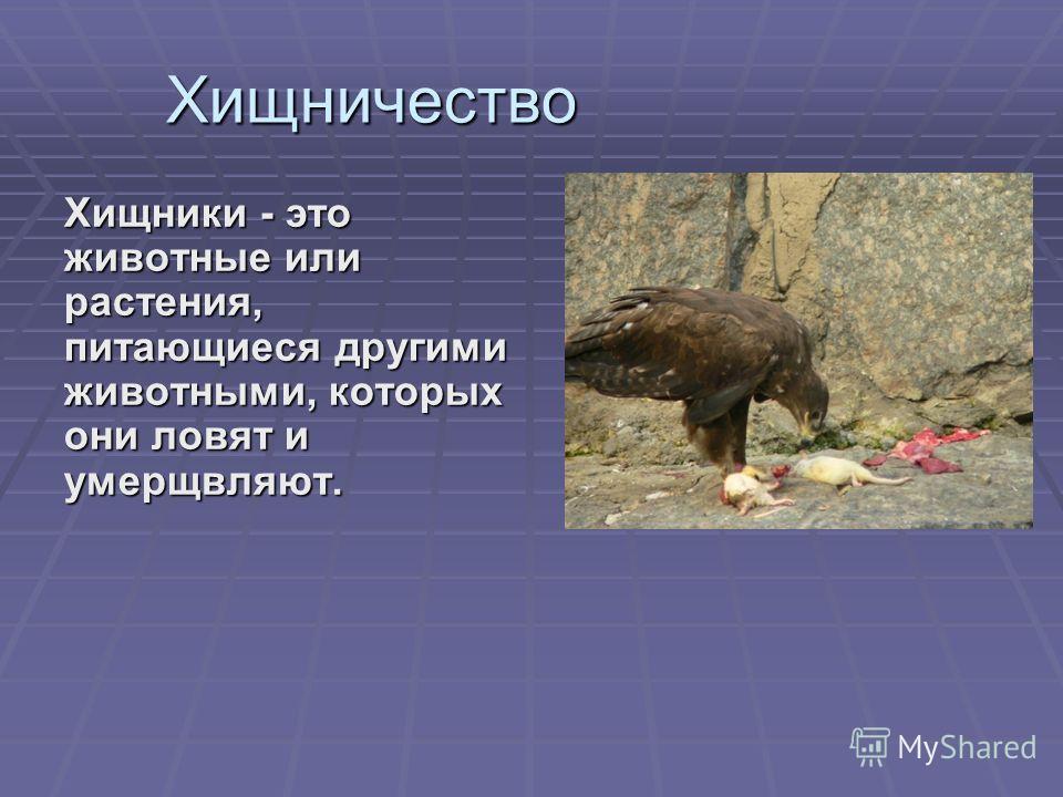 Хищничество Хищники - это животные или растения, питающиеся другими животными, которых они ловят и умерщвляют.