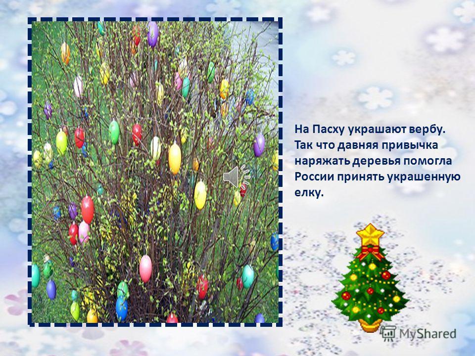 Из Германии этот обычай привезли во Францию, потом в Англию, а потом и в Россию. Вообще-то на Руси по разным случаям наряжали деревья. На Троицу украшают березу лентами.