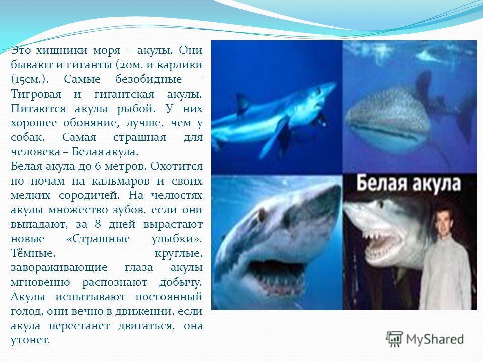 Это хищники моря – акулы. Они бывают и гиганты (20м. и карлики (15см.). Самые безобидные – Тигровая и гигантская акулы. Питаются акулы рыбой. У них хорошее обоняние, лучше, чем у собак. Самая страшная для человека – Белая акула. Белая акула до 6 метр