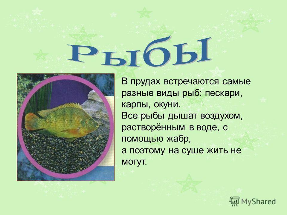 В прудах встречаются самые разные виды рыб: пескари, карпы, окуни. Все рыбы дышат воздухом, растворённым в воде, с помощью жабр, а поэтому на суше жить не могут.