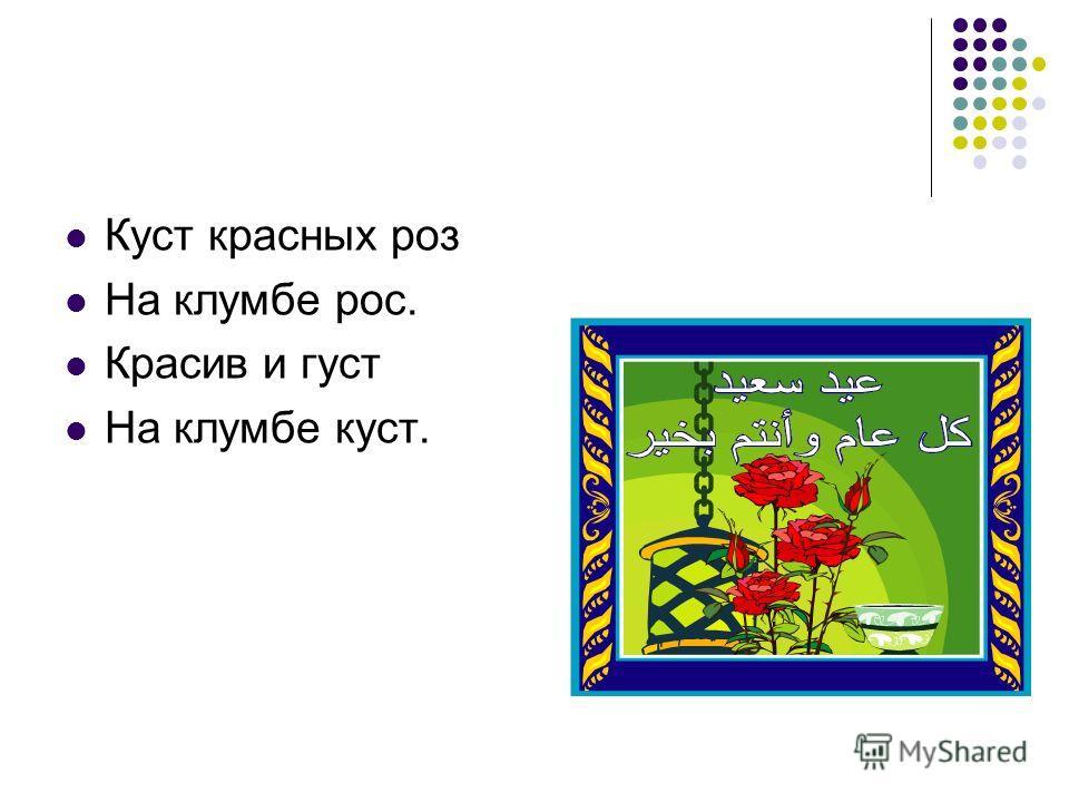 Куст красных роз На клумбе рос. Красив и густ На клумбе куст.