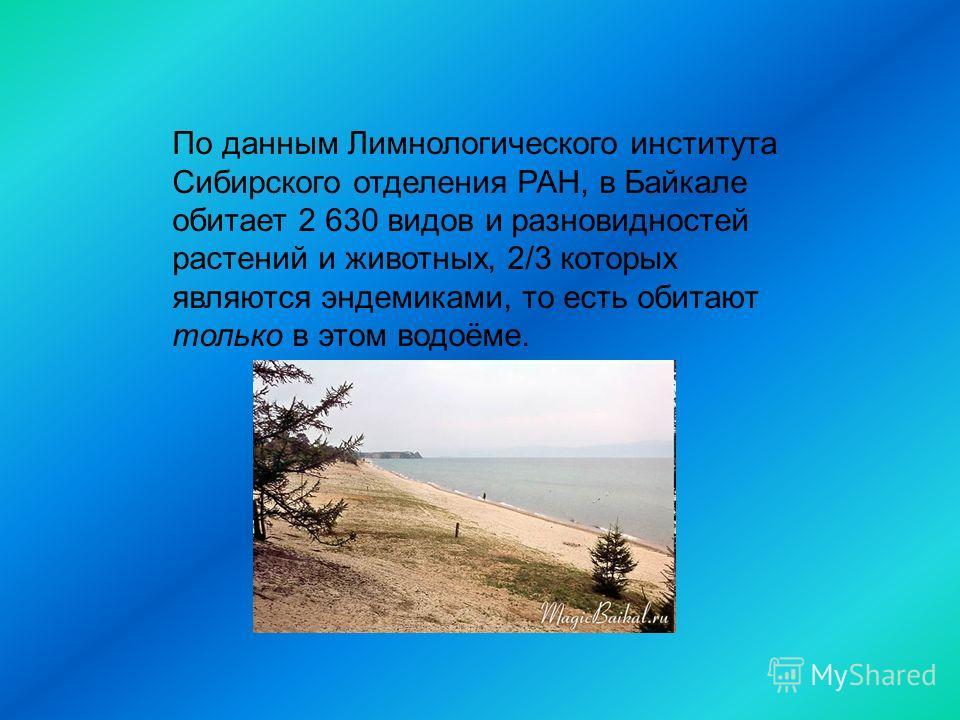 По данным Лимнологического института Сибирского отделения РАН, в Байкале обитает 2 630 видов и разновидностей растений и животных, 2/3 которых являются эндемиками, то есть обитают только в этом водоёме.