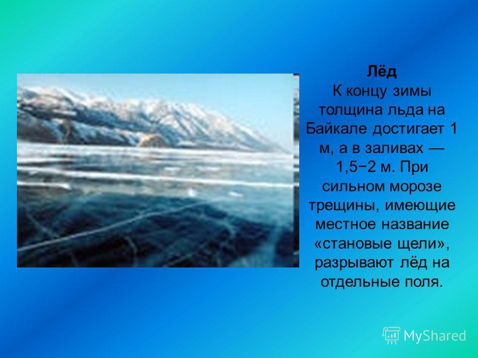 Лёд К концу зимы толщина льда на Байкале достигает 1 м, а в заливах 1,52 м. При сильном морозе трещины, имеющие местное название «становые щели», разрывают лёд на отдельные поля.