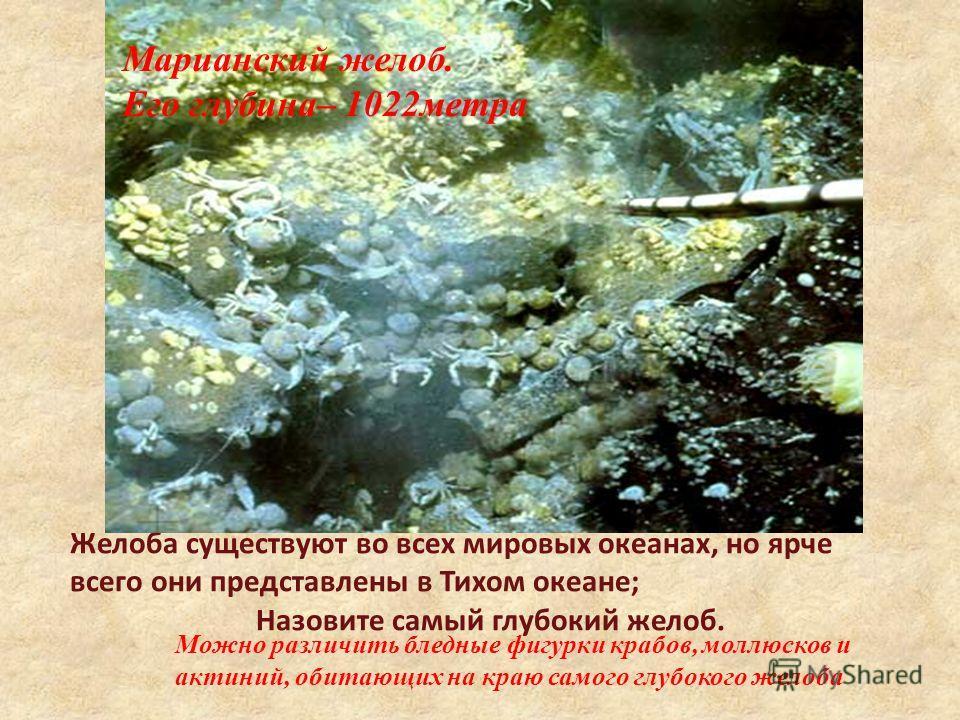 Желоба существуют во всех мировых океанах, но ярче всего они представлены в Тихом океане; Назовите самый глубокий желоб. Можно различить бледные фигурки крабов, моллюсков и актиний, обитающих на краю самого глубокого желоба Марианский желоб. Его глуб