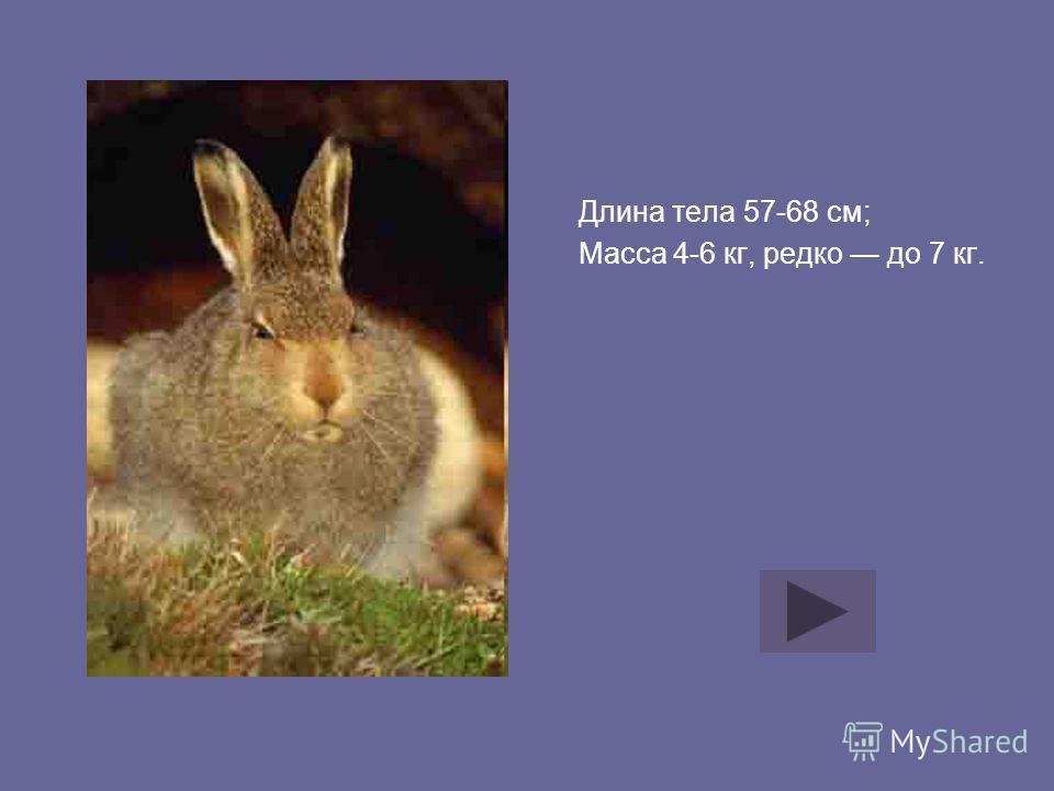Длина тела 57-68 см; Масса 4-6 кг, редко до 7 кг.