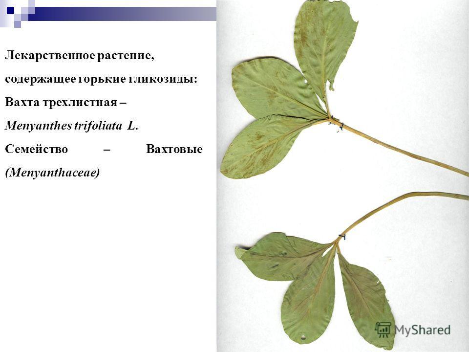 33 Лекарственное растение, содержащее горькие гликозиды: Вахта трехлистная – Menyanthes trifoliata L. Семейство – Вахтовые (Menyanthaceae)