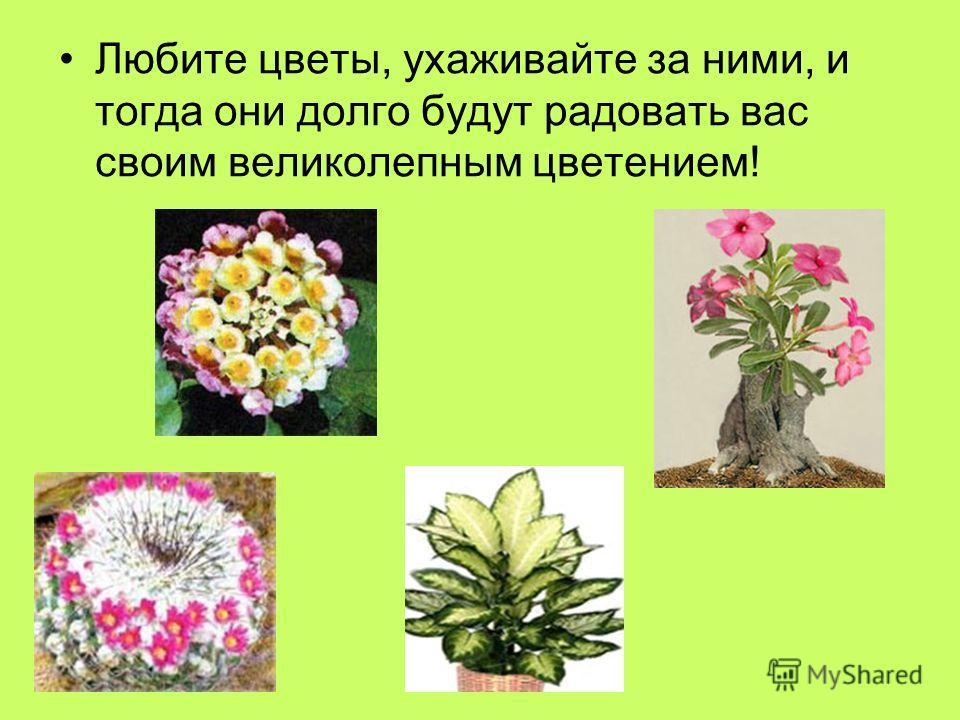 Любите цветы, ухаживайте за ними, и тогда они долго будут радовать вас своим великолепным цветением!