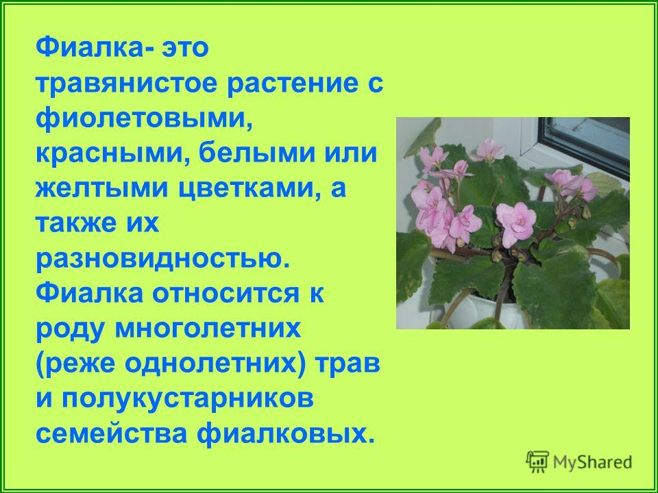 Фиалка- это травянистое растение с фиолетовыми, красными, белыми или желтыми цветками, а также их разновидностью. Фиалка относится к роду многолетних (реже однолетних) трав и полукустарников семейства фиалковых.