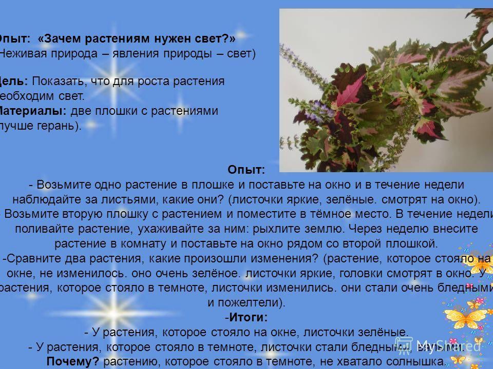 Опыт: «Зачем растениям нужен свет?» (Неживая природа – явления природы – свет) Цель: Показать, что для роста растения необходим свет. Материалы: две плошки с растениями (лучше герань). Опыт: - Возьмите одно растение в плошке и поставьте на окно и в т