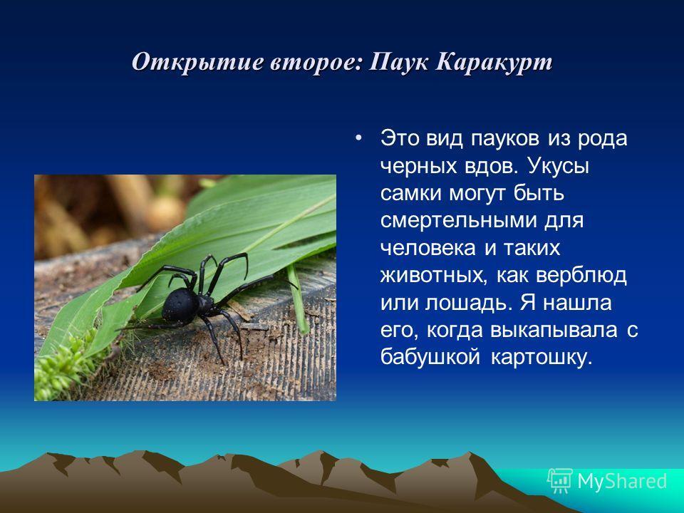 Открытие второе: Паук Каракурт Это вид пауков из рода черных вдов. Укусы самки могут быть смертельными для человека и таких животных, как верблюд или лошадь. Я нашла его, когда выкапывала с бабушкой картошку.