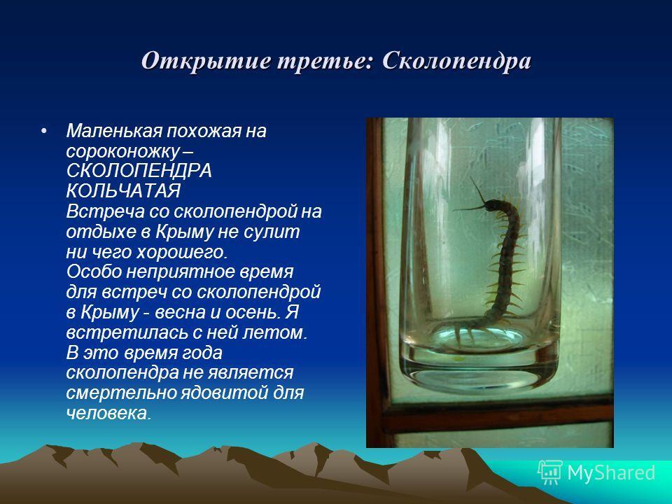 Открытие третье: Сколопендра Маленькая похожая на сороконожку – СКОЛОПЕНДРА КОЛЬЧАТАЯ Встреча со сколопендрой на отдыхе в Крыму не сулит ни чего хорошего. Особо неприятное время для встреч со сколопендрой в Крыму - весна и осень. Я встретилась с ней
