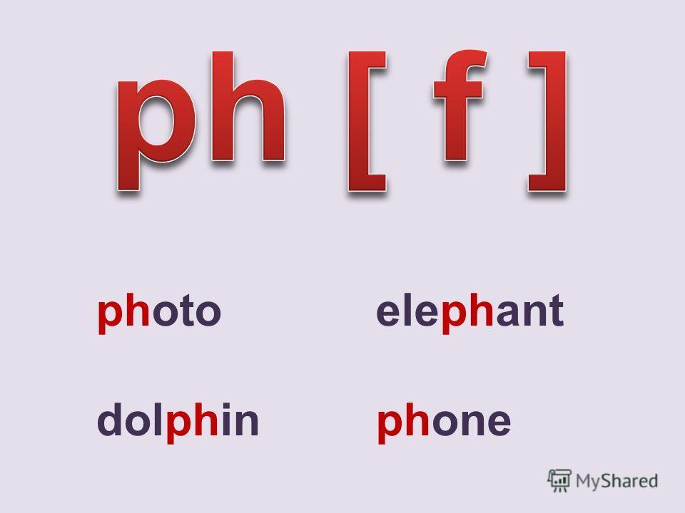 photo elephant dolphin phone