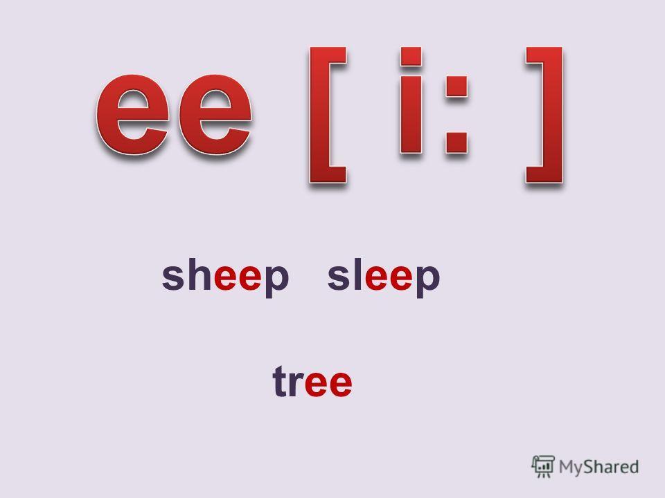 sheep sleep tree