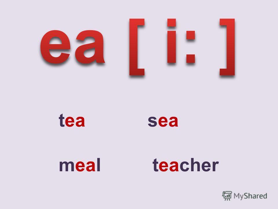 tea sea meal teacher