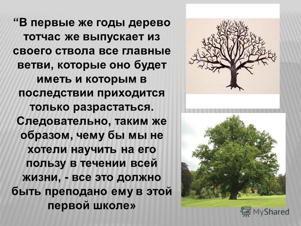 В первые же годы дерево тотчас же выпускает из своего ствола все главные ветви, которые оно будет иметь и которым в последствии приходится только разрастаться. Следовательно, таким же образом, чему бы мы не хотели научить на его пользу в течении всей