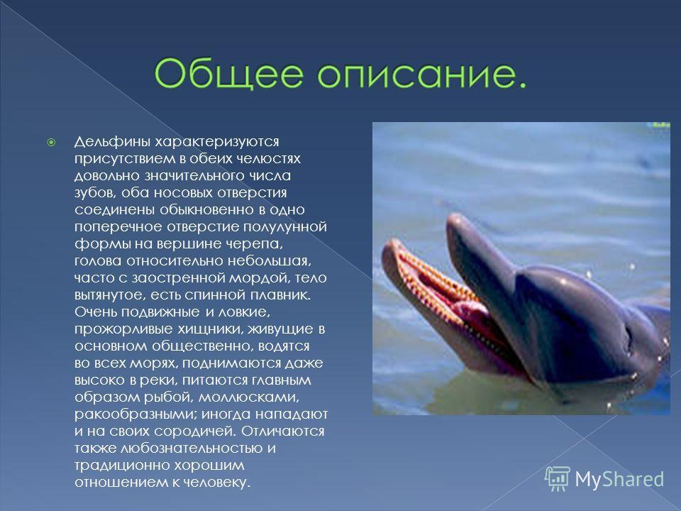 Дельфины характеризуются присутствием в обеих челюстях довольно значительного числа зубов, оба носовых отверстия соединены обыкновенно в одно поперечное отверстие полулунной формы на вершине черепа, голова относительно небольшая, часто с заостренной