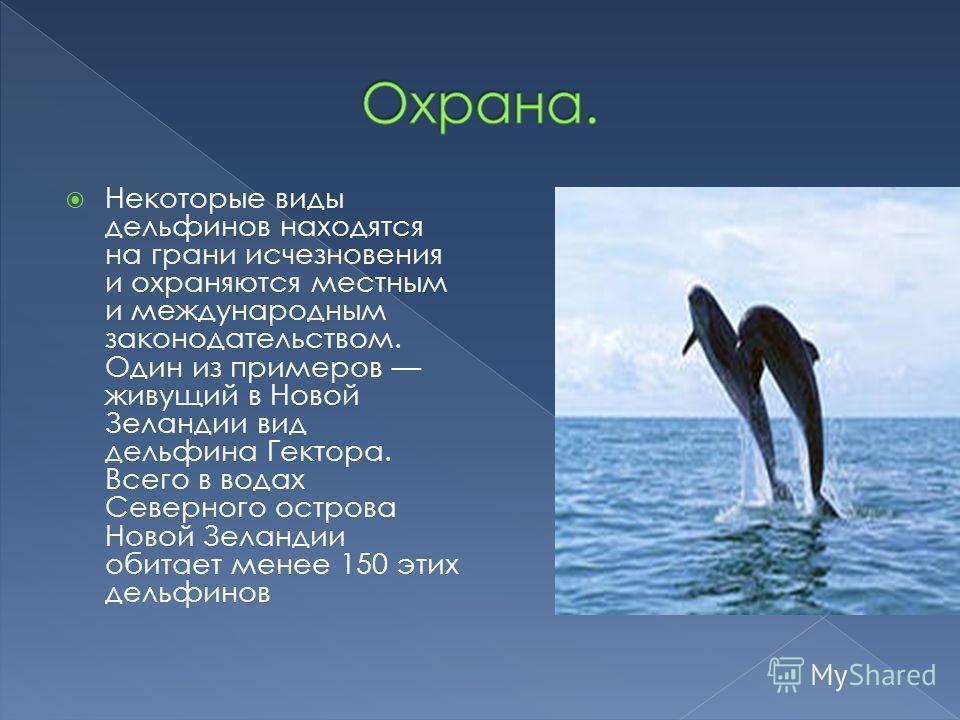 Некоторые виды дельфинов находятся на грани исчезновения и охраняются местным и международным законодательством. Один из примеров живущий в Новой Зеландии вид дельфина Гектора. Всего в водах Северного острова Новой Зеландии обитает менее 150 этих дел