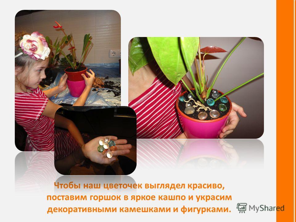 Чтобы наш цветочек выглядел красиво, поставим горшок в яркое кашпо и украсим декоративными камешками и фигурками.