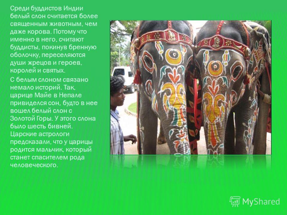 Что уж и говорить, если слон в буддизме наиболее почитаемое священное животное. Духовное знание связано с ним. Стабильность – вот, что отличает слона. Белый Слон – является одним из символов Будды, потому что именно он явился во сне царице Майе перед