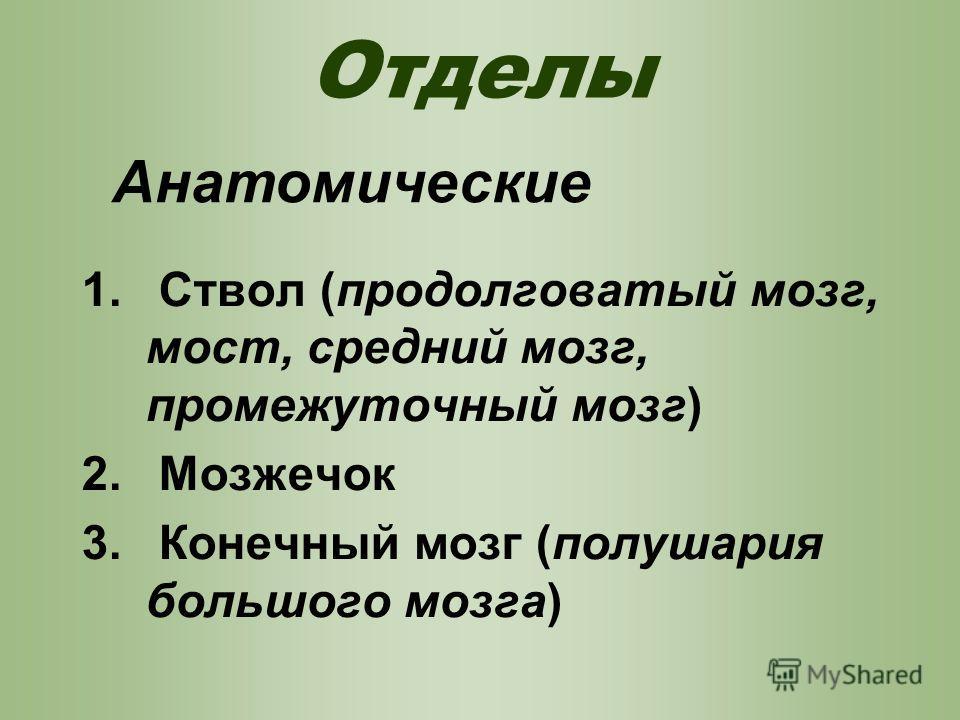 Отделы 1. Ствол (продолговатый мозг, мост, средний мозг, промежуточный мозг) 2. Мозжечок 3. Конечный мозг (полушария большого мозга) Анатомические