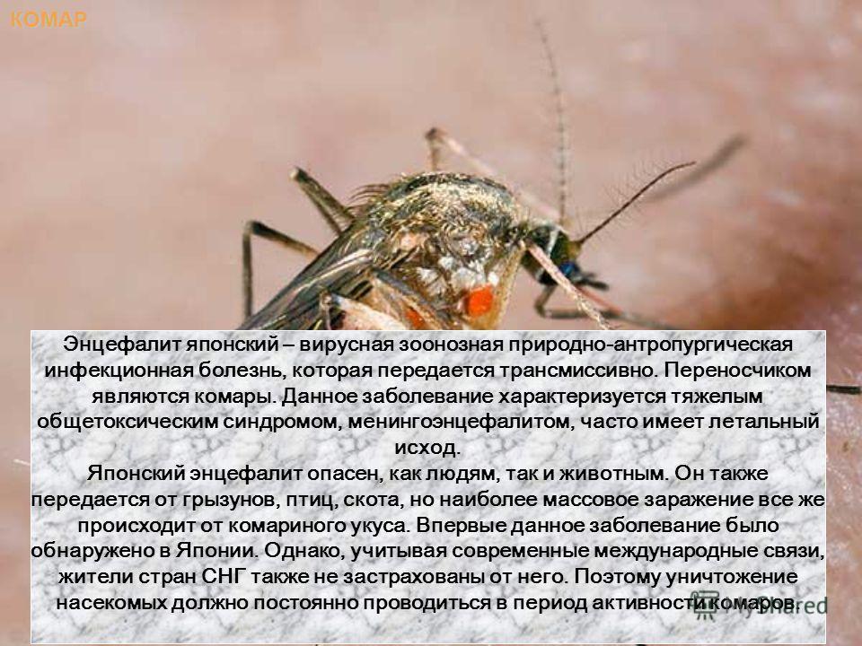 КОМАР Энцефалит японский – вирусная зоонозная природно-антропургическая инфекционная болезнь, которая передается трансмиссивно. Переносчиком являются комары. Данное заболевание характеризуется тяжелым общетоксическим синдромом, менингоэнцефалитом, ча