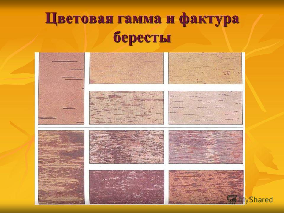 Цветовая гамма и фактура бересты