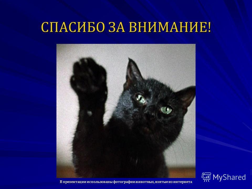 СПАСИБО ЗА ВНИМАНИЕ! В презентации использованы фотографии животных, взятые из интернета
