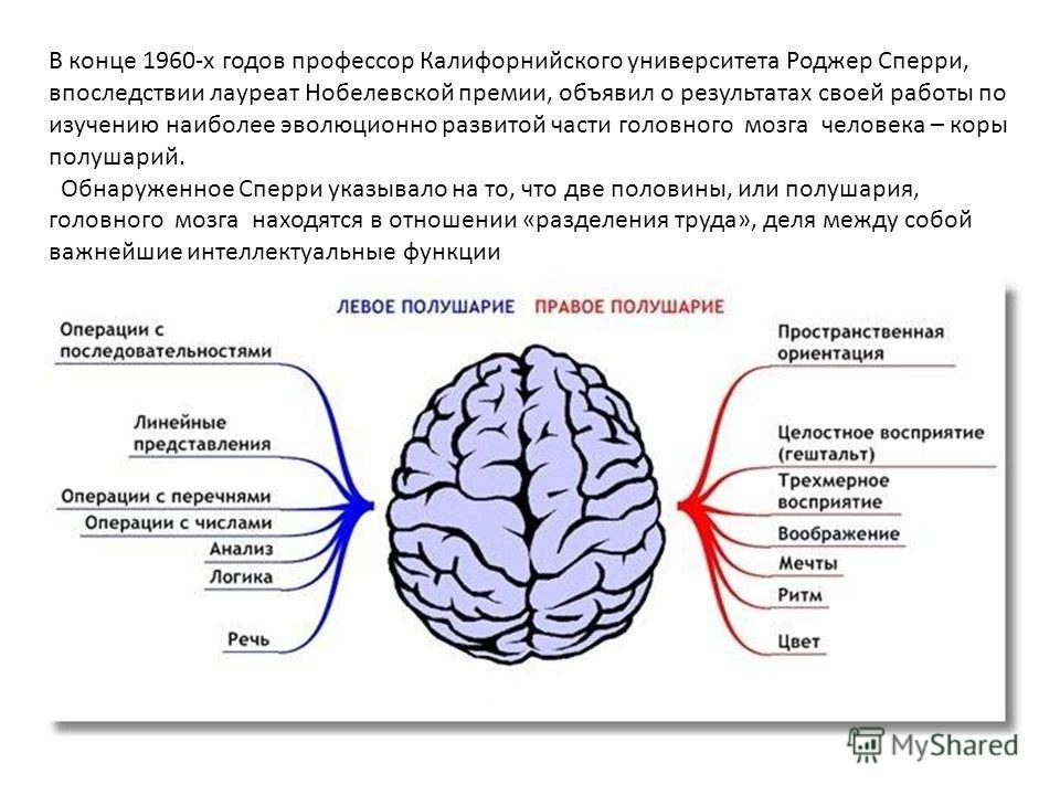 В конце 1960 х годов профессор Калифорнийского университета Роджер Сперри, впоследствии лауреат Нобелевской премии, объявил о результатах своей работы по изучению наиболее эволюционно развитой части головного мозга человека – коры полушарий. Обнаруже