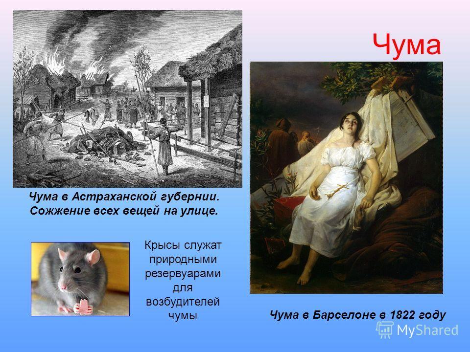 Чума Чума в Астраханской губернии. Сожжение всех вещей на улице. Чума в Барселоне в 1822 году Крысы служат природными резервуарами для возбудителей чумы