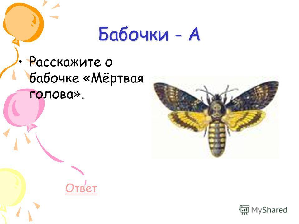 Бабочки - А Расскажите о бабочке «Мёртвая голова». Ответ