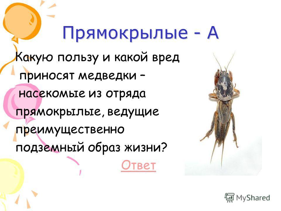 Прямокрылые - А Какую пользу и какой вред приносят медведки – насекомые из отряда прямокрылые, ведущие преимущественно подземный образ жизни? Ответ