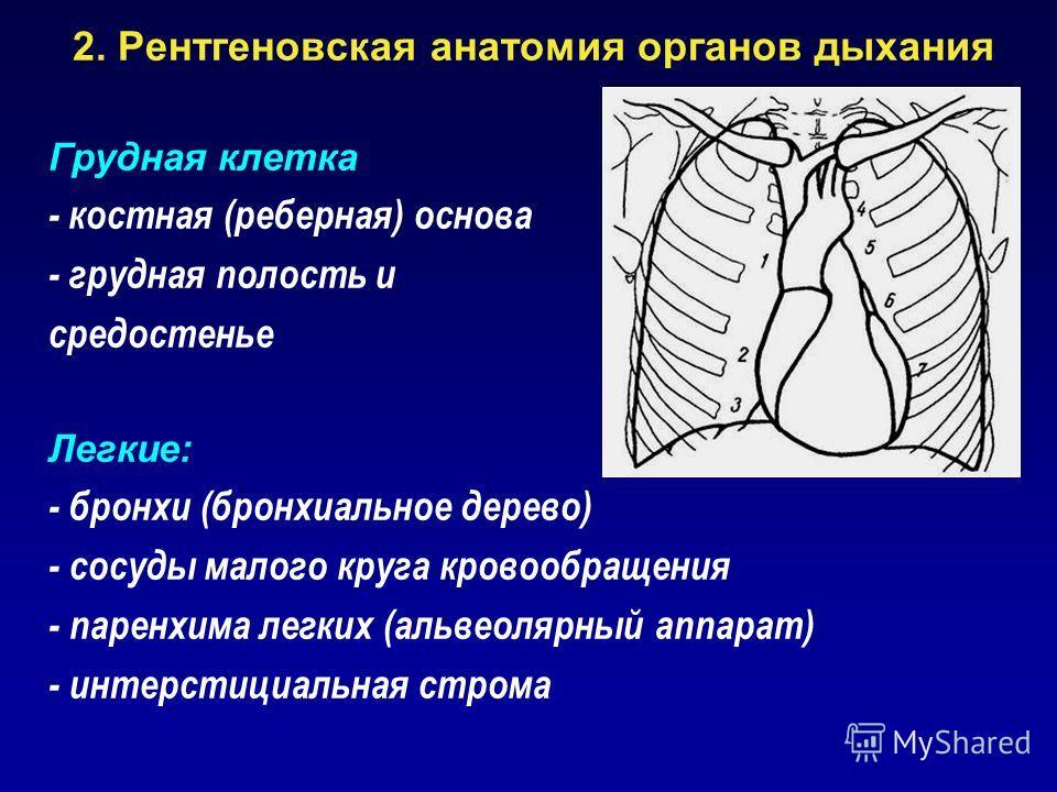 2. Рентгеновская анатомия органов дыхания Грудная клетка - костная (реберная) основа - грудная полость и средостенье Легкие: - бронхи (бронхиальное дерево) - сосуды малого круга кровообращения - паренхима легких (альвеолярный аппарат) - интерстициаль