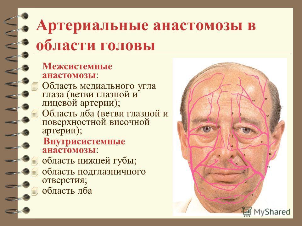 Артериальные анастомозы в области головы Межсистемные анастомозы: 4 Область медиального угла глаза (ветви глазной и лицевой артерии); 4 Область лба (ветви глазной и поверхностной височной артерии); Внутрисистемные анастомозы: 4 область нижней губы; 4