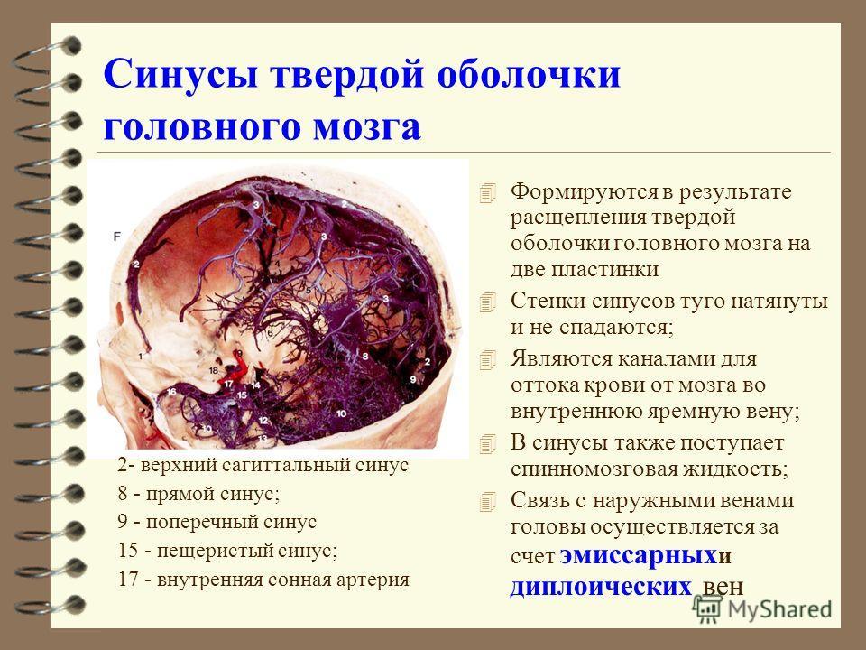 Синусы твердой оболочки головного мозга 4 Формируются в результате расщепления твердой оболочки головного мозга на две пластинки 4 Стенки синусов туго натянуты и не спадаются; 4 Являются каналами для оттока крови от мозга во внутреннюю яремную вену;