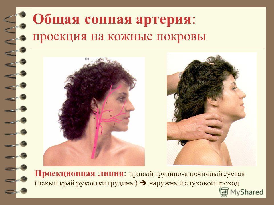 Общая сонная артерия: проекция на кожные покровы Проекционная линия: правый грудино-ключичный сустав (левый край рукоятки грудины) наружный слуховой проход
