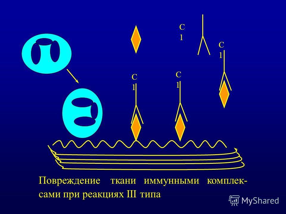 С1С1 С1С1 С1С1 С1С1 Повреждение ткани иммунными комплек- сами при реакциях III типа