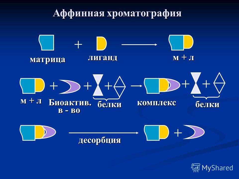Аффинная хроматография матрица лиганд м + л белки Биоактив. в - во комплекс белки десорбция