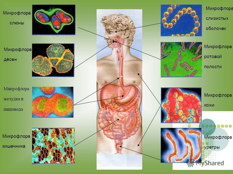 Человек состоит из человеческих клеток, а также бактериальных, грибковых и вирусных форм жизни. В теле человека несколько триллионов клеток и более 100 триллионов бактерий, их насчитывается пятьсот видов. Клетки кожи Клетки крови Бактерии
