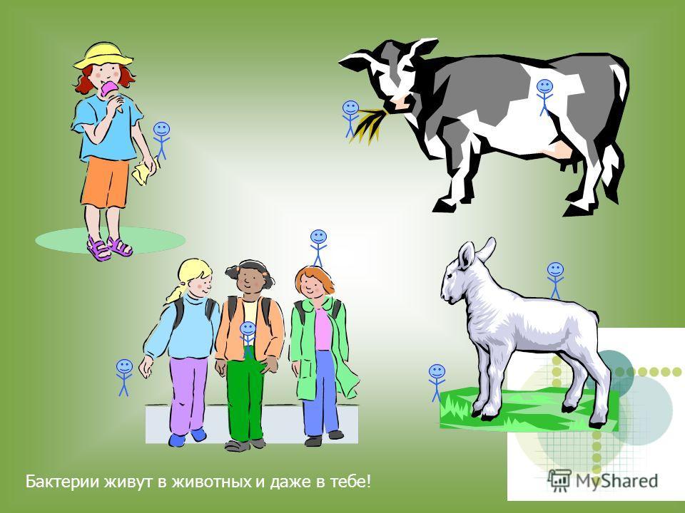 Бактерии находятся везде. Они есть в почве, в воде, в еде, в воздухе, в дожде Бактерии находятся везде. Они есть в почве, в воде, в еде, в воздухе, в дожде … Бактерии находятся везде. Они есть в почве, в воде, в еде, в воздухе, в дожде …