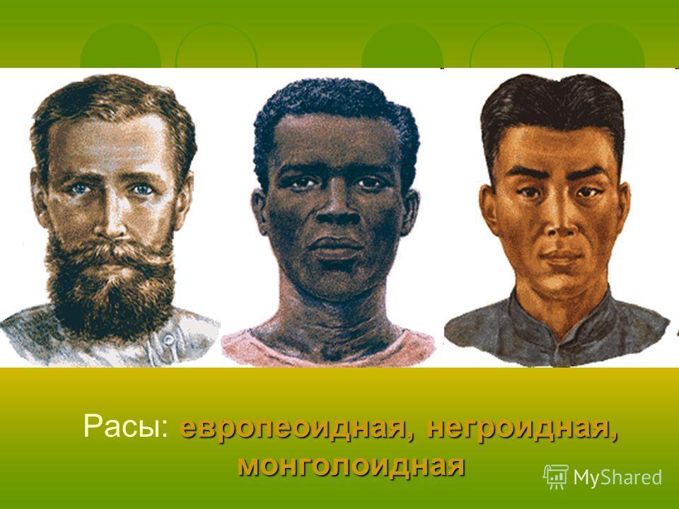 европеоидная, негроидная, монголоидная Расы: европеоидная, негроидная, монголоидная
