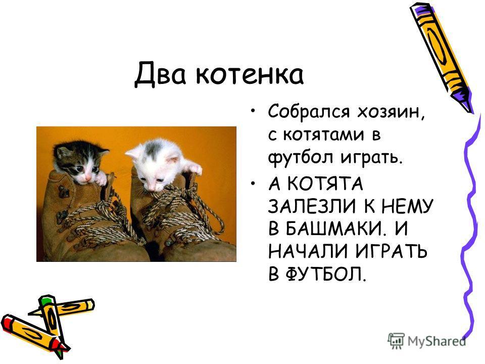 Два котенка Собрался хозяин, с котятами в футбол играть. А КОТЯТА ЗАЛЕЗЛИ К НЕМУ В БАШМАКИ. И НАЧАЛИ ИГРАТЬ В ФУТБОЛ.