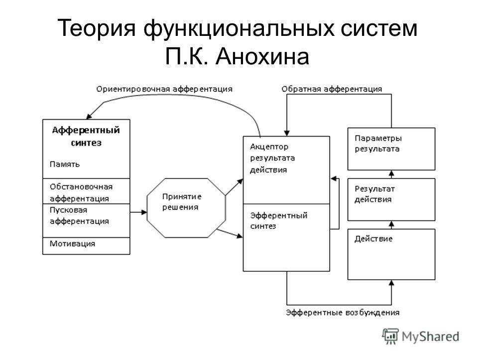 Теория функциональных систем П.К. Анохина