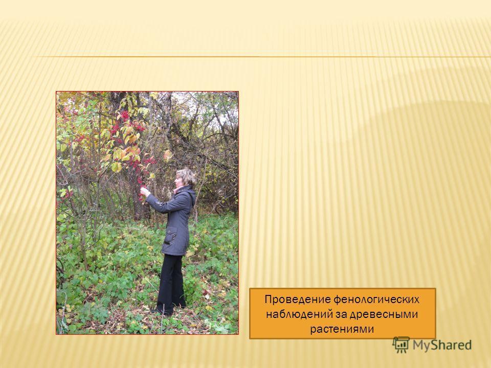 Проведение фенологических наблюдений за древесными растениями
