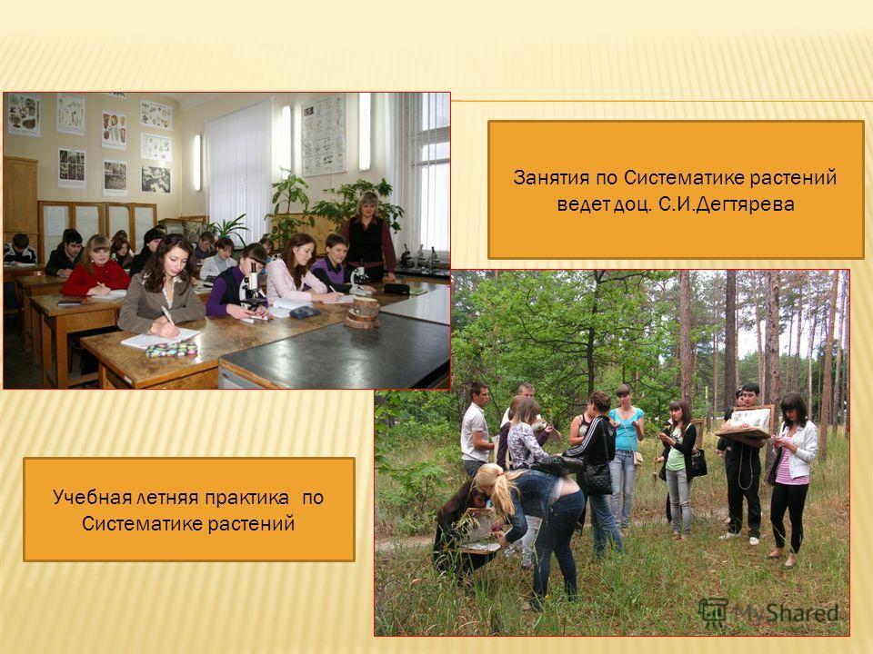 Занятия по Систематике растений ведет доц. С.И.Дегтярева Учебная летняя практика по Систематике растений