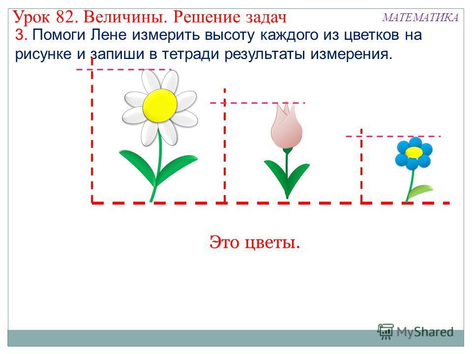 3. Помоги Лене измерить высоту каждого из цветков на рисунке и запиши в тетради результаты измерения. Урок 82. Величины. Решение задач МАТЕМАТИКА Это цветы.