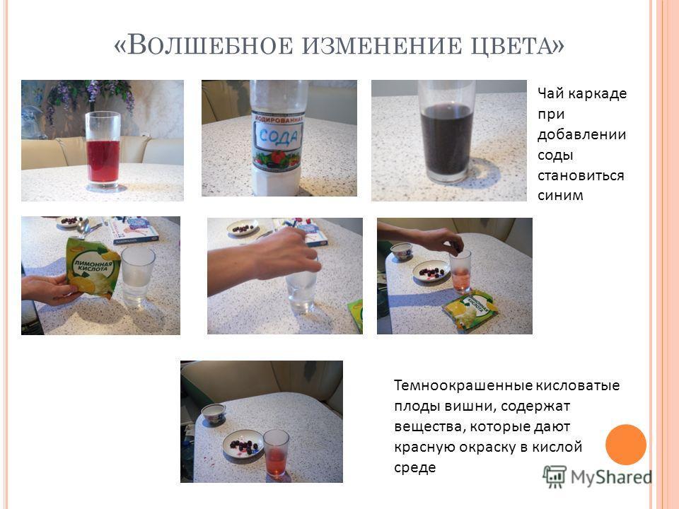 «В ОЛШЕБНОЕ ИЗМЕНЕНИЕ ЦВЕТА » Чай каркаде при добавлении соды становиться синим Темноокрашенные кисловатые плоды вишни, содержат вещества, которые дают красную окраску в кислой среде