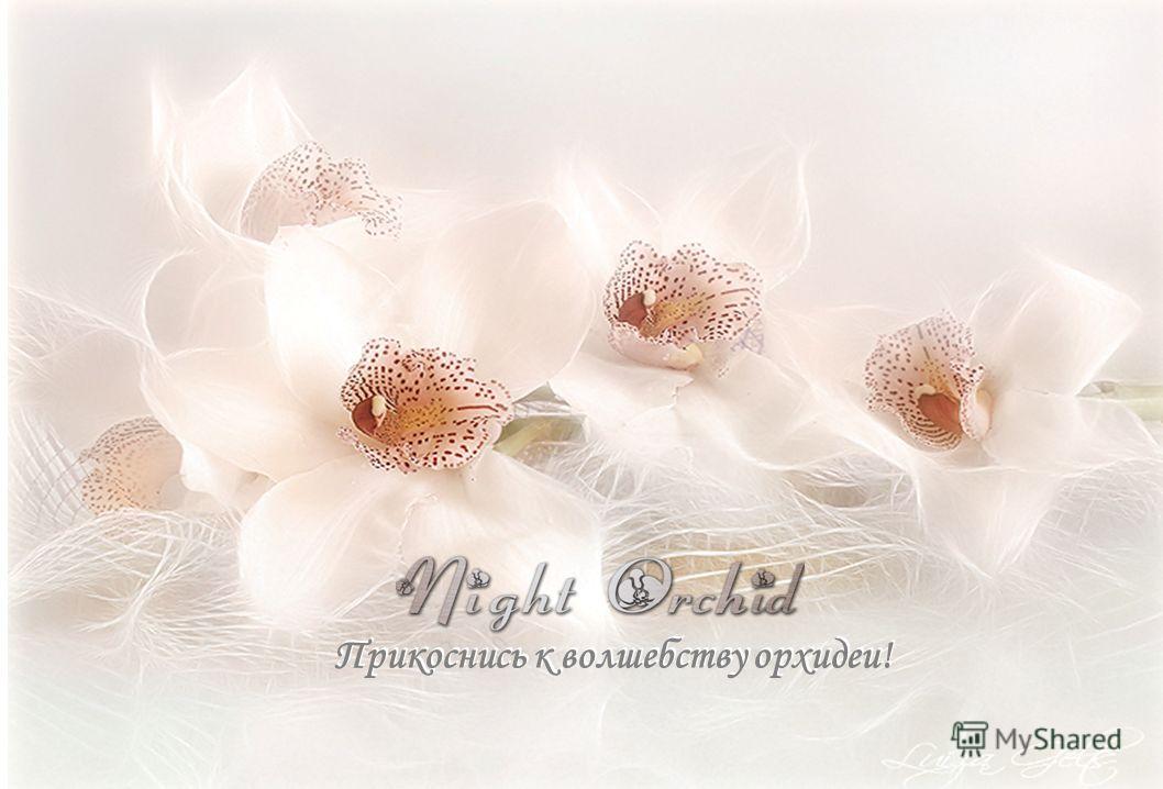 Прикоснись к волшебству орхидеи!