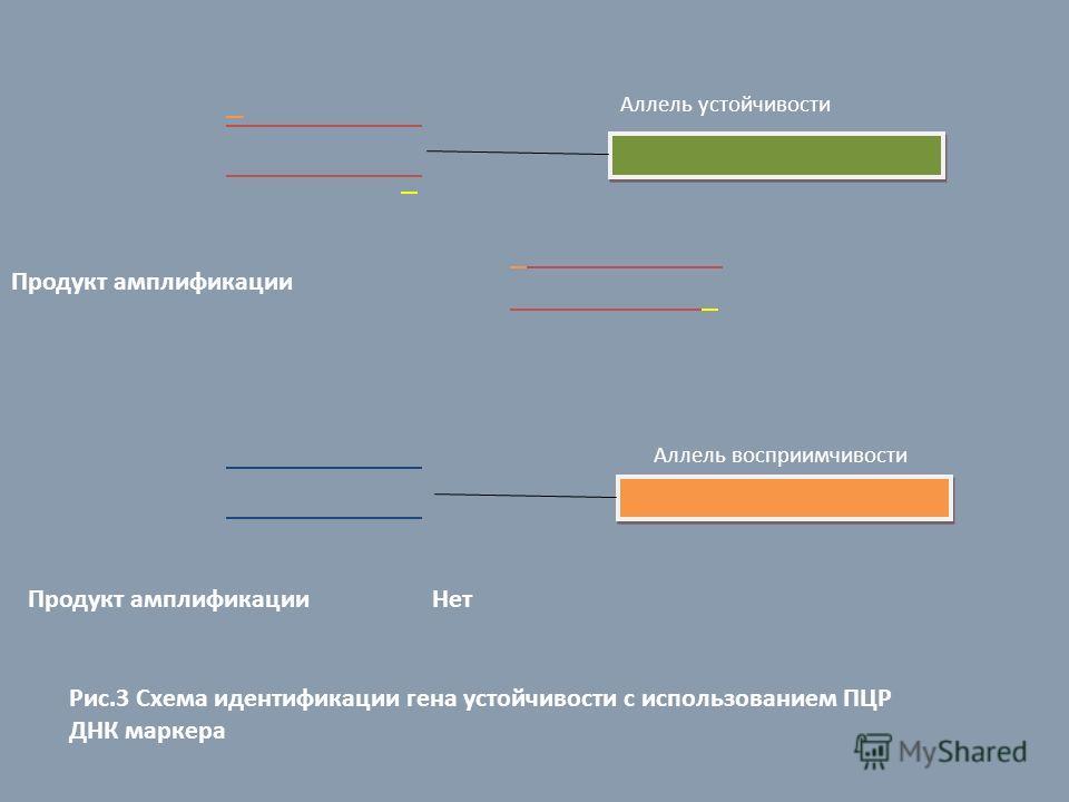 Аллель устойчивости Продукт амплификации Аллель восприимчивости Продукт амплификации Нет Рис.3 Схема идентификации гена устойчивости с использованием ПЦР ДНК маркера