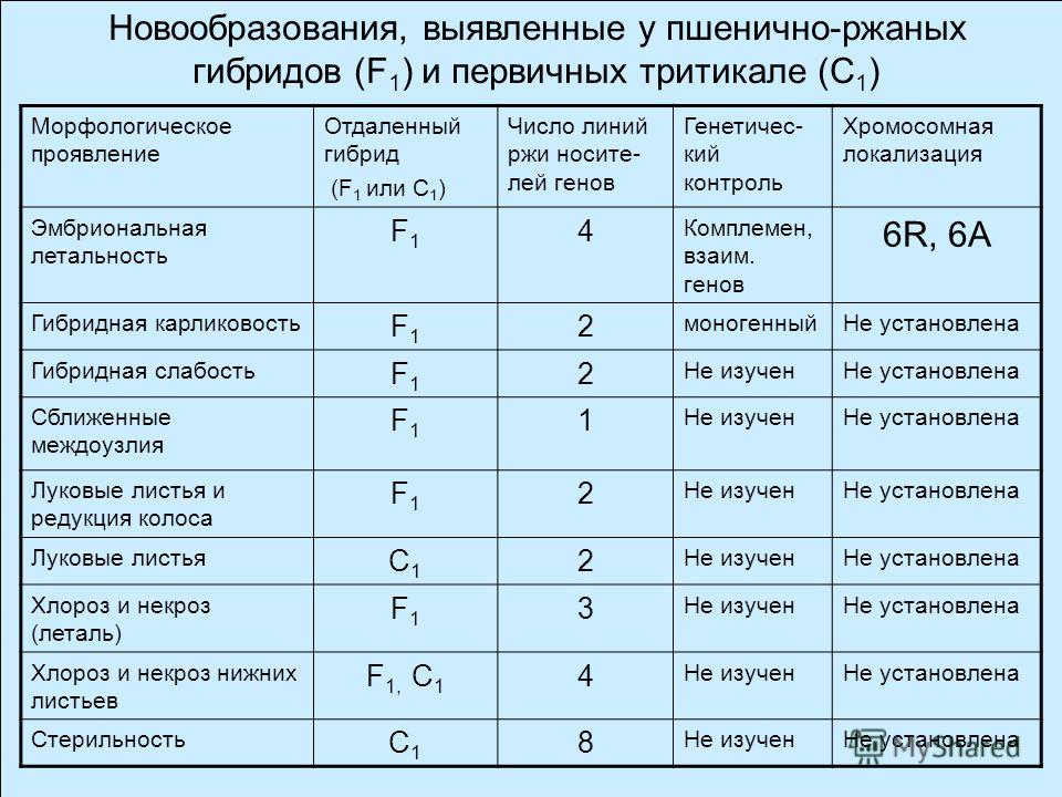 Ген Eml ржи локализован в хромосоме 6R и сцеплен с двумя SSR- маркерами Эффект гена Eml проявляется в гетерозиготе Гибель пшенично-ржаных зародышей не связана с фрагментацией хроматина или потерей хромосом одного из родителей. Ген пшеницы Eml-6A (нес